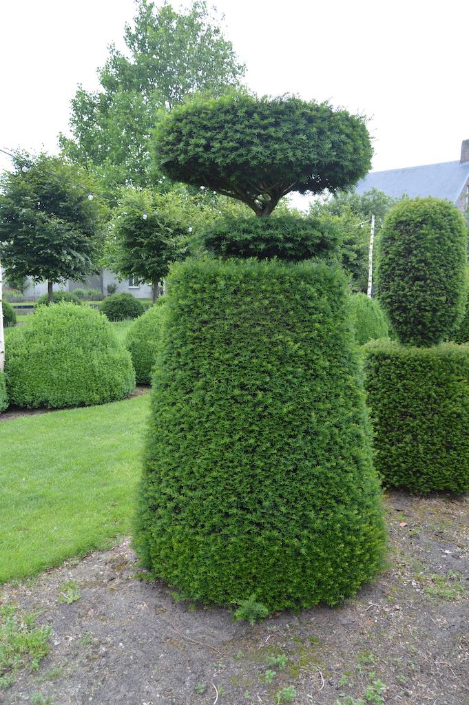 Taxus baccata (Yew) bespoke topiary plant (17)