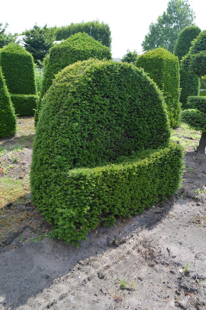Taxus baccata (Yew) bespoke topiary plant (40)