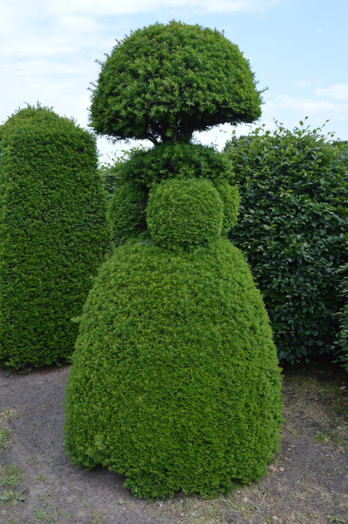 Taxus baccata (Yew) bespoke topiary plant (62)